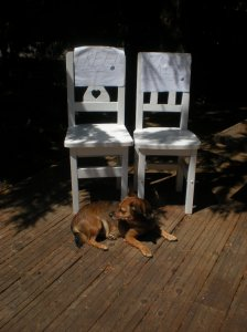small dogs and small chairs