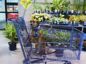 cart dogs