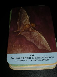 animal and oracle cards, bat magick and messages