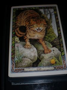 animal and oracle cards