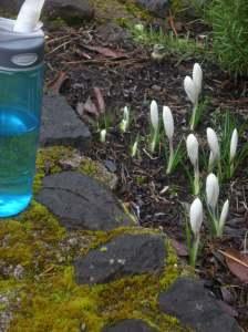 eugene spring scenes