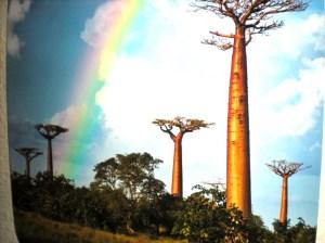 madagascar rainbow