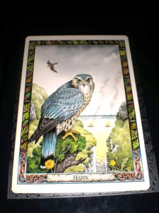animal cards, hawk meanings