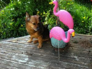 dogs and flamingos