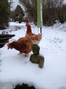 Welsh Snow Chickens.And Buddha.