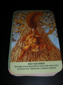 animal messages, red squirrel