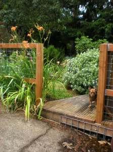 daphne shrub, lilies