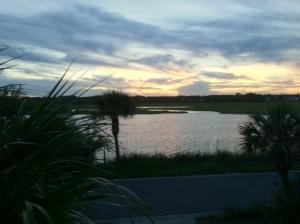 carolina marsh