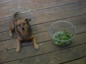 dogs and gardens, deck salads