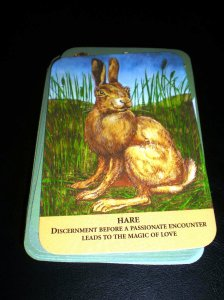 animal oracle cards