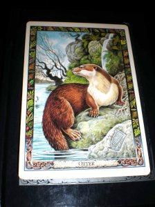 animal cards, druid healing