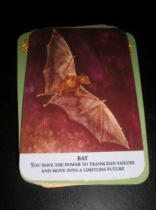 bat messages, animal oracle cards, failure messages