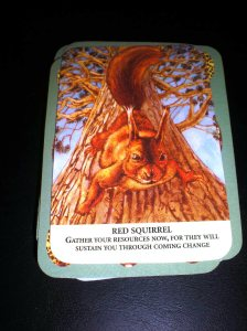 oracle and animal cards, red squirrel messages,