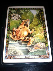 druid animal messages, frog meaning