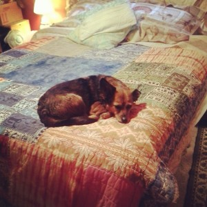 dogs on beds, hawaiian quilts, guest rooms