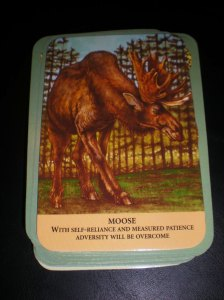 oracle cards, animal messages, moose, self-reliance