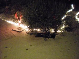 eugene snow, december storms, pink flamingos in show