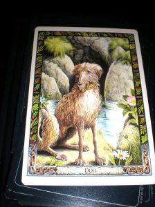 druid animals, oracle cards, dog symbolism, loyalty