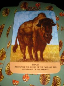 animal messages, oracle cards, past riches, future abundance