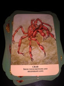 animal messages, oracle cards, crab symbolism