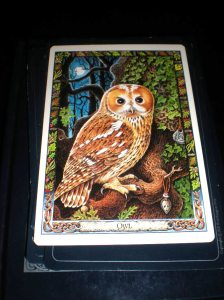animal cards, oracle cards, owl symbolizm