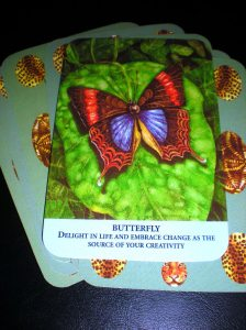animal messages, butterfly message, oracle cards