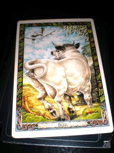 animal messages, bull is tarbh, druid cards