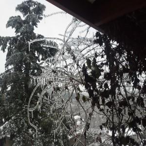 eugene ice storm