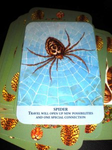 animal oracle cards, messages of travel, spider symbolism