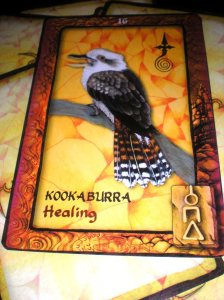 healing messages, kookaburra, animal oracle cards, australia