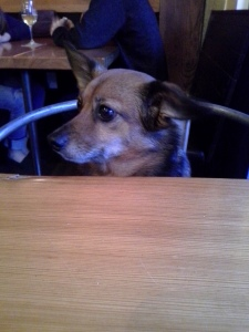dogs in bars