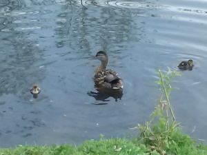 And duck babies, too!