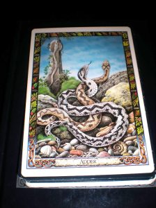 animal oracle cards, druid messages, adder