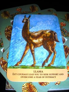 oracle cards, animal messages, llama and alpaca