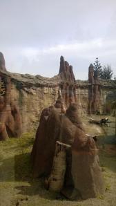 Many meerkats.