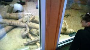 """Em and her new meerkat friends!"""