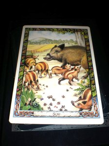 animal messages, sow is muc, oracle cards, generosity,