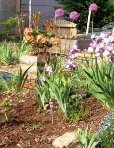 """Iris, Allium, Rhododendron."""