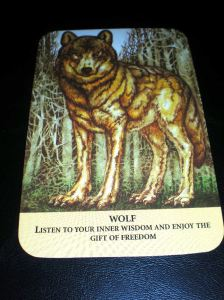 animal messages, freedom, wolf, oracle cards