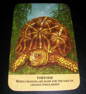 animal messages, tortoise wisdom, oracle cards