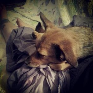 GrandDog in my lap.