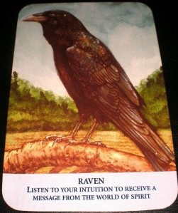 animal messages, raven, intuition, robin williams, depression