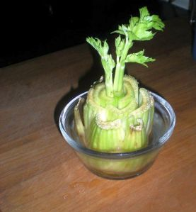 A second life for CELERY!