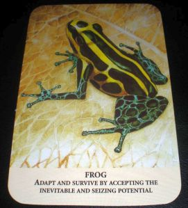 frog messages of acceptance, oracle cards