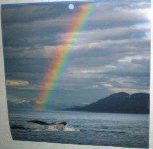 inspirational serene ocean rainbow