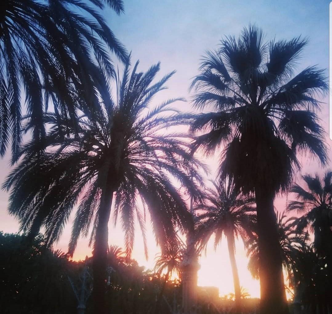 palmtree land