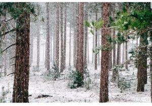 ease in winter